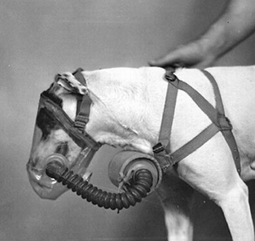 dog gas masks 11 Doggy Gas Masks wtf Military Gas Masks