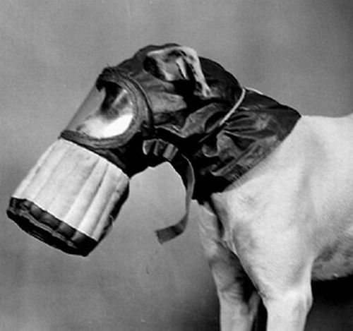 dog gas masks 12 Doggy Gas Masks wtf Military Gas Masks