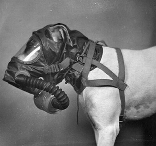 dog gas masks 13 Doggy Gas Masks wtf Military Gas Masks