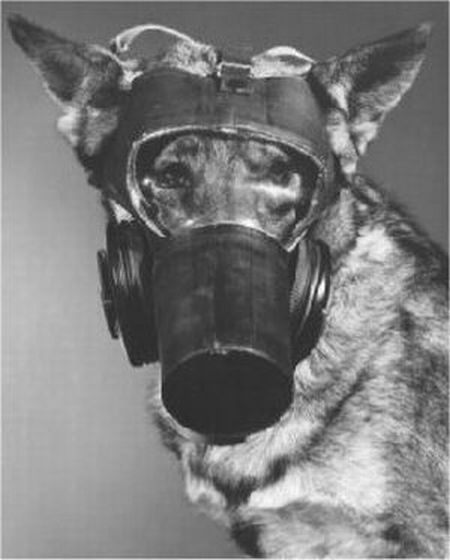dog gas masks 18 Doggy Gas Masks wtf Military Gas Masks