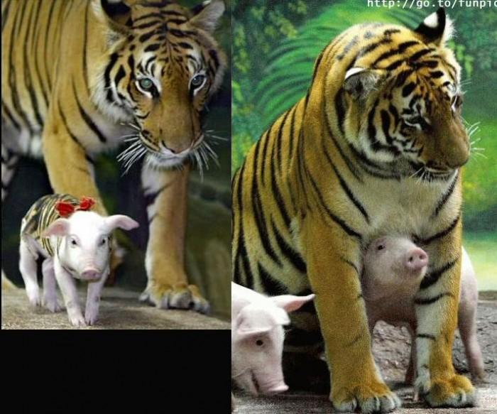 tiger_mom_4.jpg (79 KB)