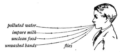 flies.jpg (33 KB)
