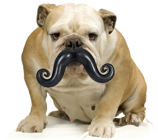 Humunga Stache Humunga Stache Dog Toy