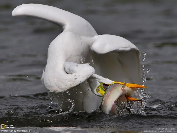 fishtwist.jpg (168 KB)