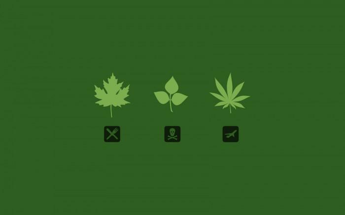 leaf.jpg (66 KB)