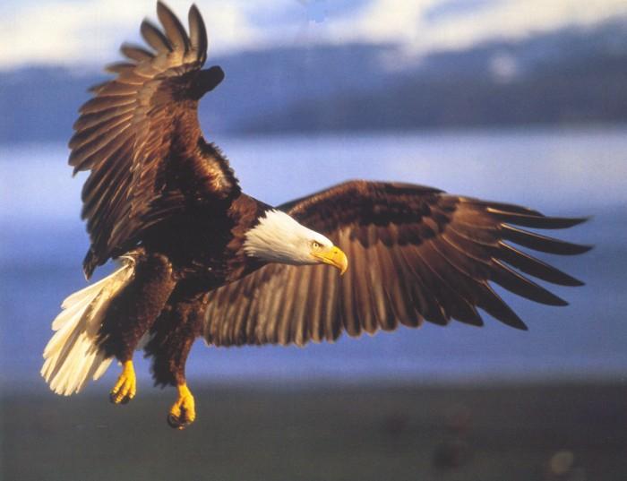 eagle-truth-love-justice-beloved-earth.jpg (298 KB)