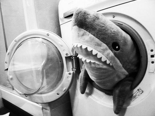 shark.jpg (45 KB)