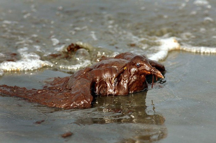la oil spill.52 700x466 Meanwhile in America