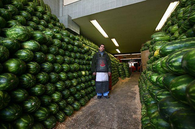 watermelons.jpg (65 KB)