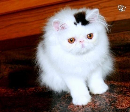 CAT-TOP-HAT.jpg (72 KB)