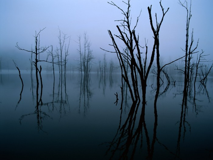 blackbluetreeslake 700x525 Dark Trees Wallpapers 1 wtf Wallpaper Nature