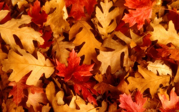 leaves (12) 700x437 Autumn Leaves Wallpapers Wallpaper Nature