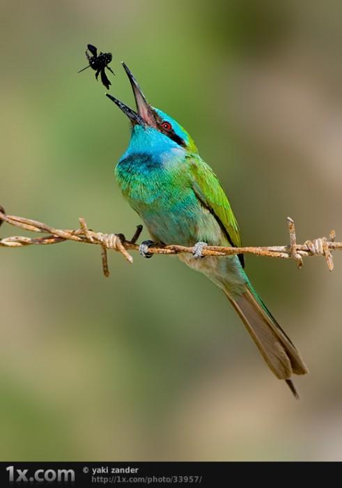 bird.jpg (221 KB)