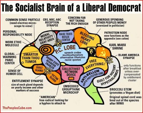 Liberal_Brain.jpg (83 KB)