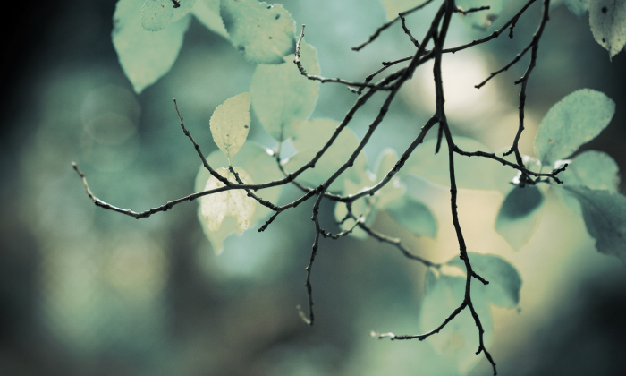 leaves (3).png (1 MB)
