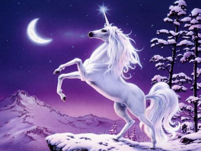 unicorn.jpg (87 KB)
