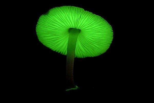 mushroom__1_.jpg (15 KB)