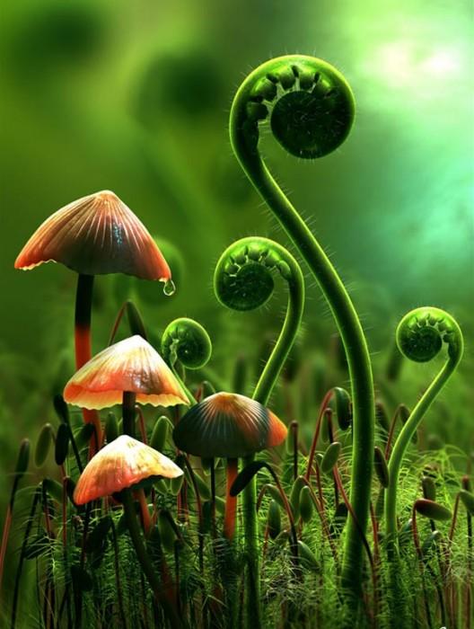 mushroom__8_.jpg (84 KB)