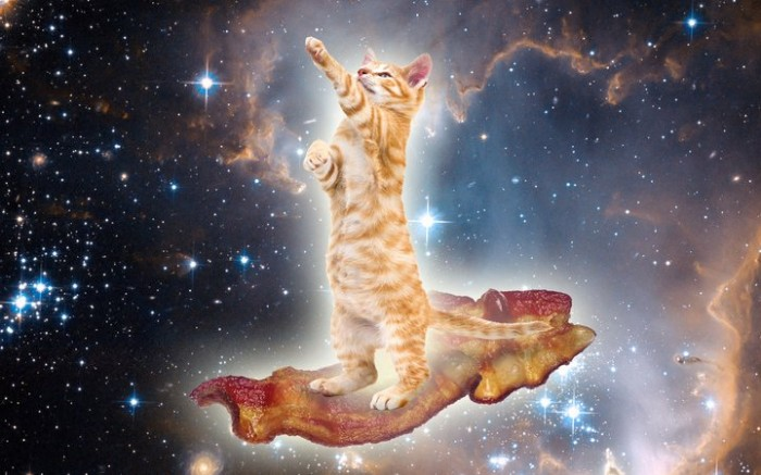 Bakon Kitteh 700x437 Bakon Kitteh Space lolcats forum fodder Food