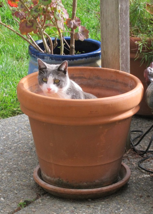 Potted Buddy 3 501x700 Happy Pot Day!   lolcats Humor 420
