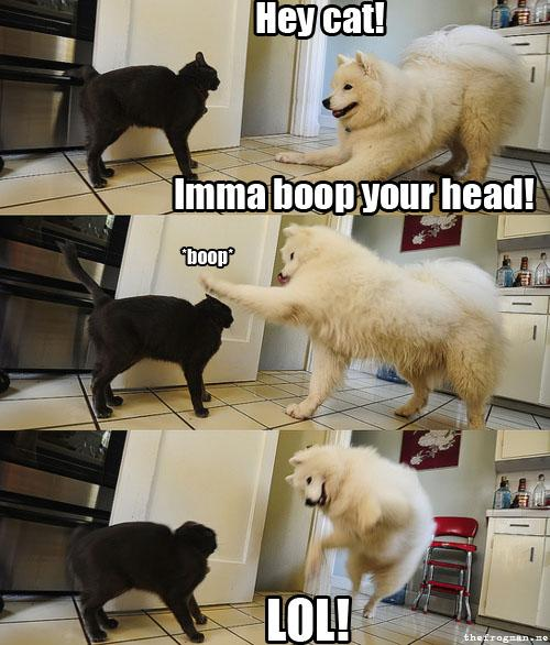 Happy-Dog-Boop-Cat.jpg (54 KB)