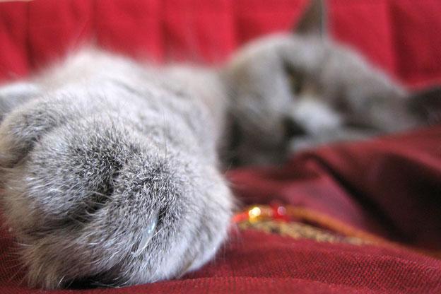 cats-paw.jpg (47 KB)
