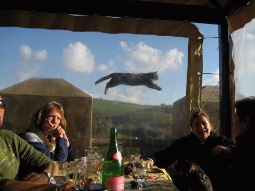 Cat Flight.jpg (74 KB)