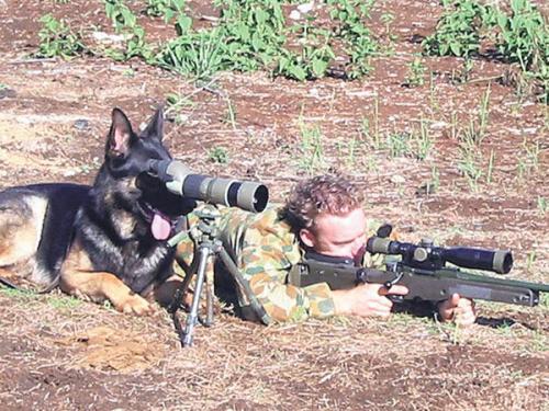 armydog2cs9.jpg (120 KB)