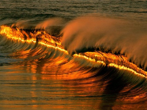 golden wave at sunset 500x375 Golden Wave at Sunset Nature
