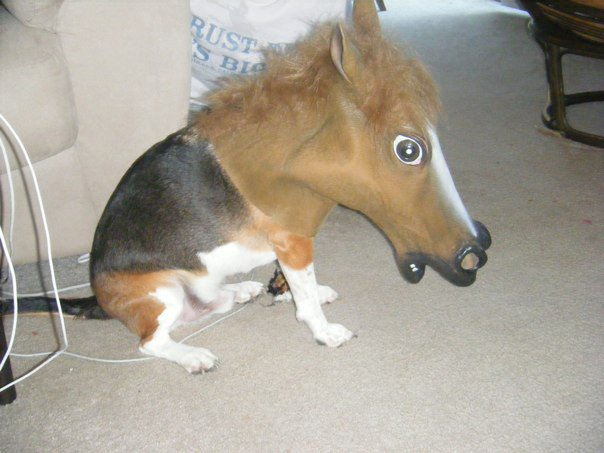 Dog Horse Mask Dog with Sara Jessica Parker Mask