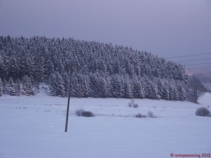 forest.jpg (393 KB)