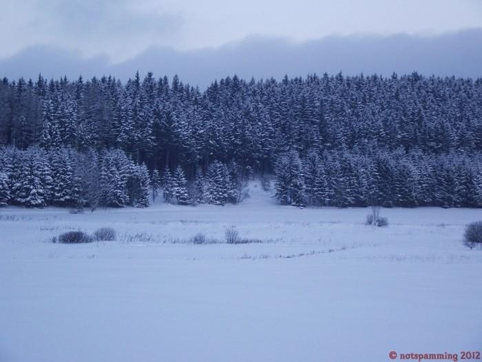 forest3.jpg (541 KB)