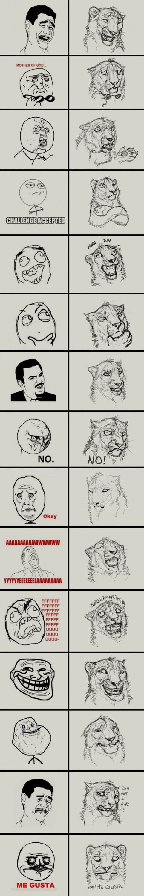 cat faces lolcats Humor