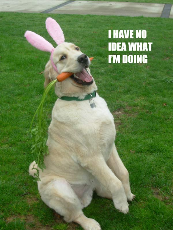 k2nED Easter dog