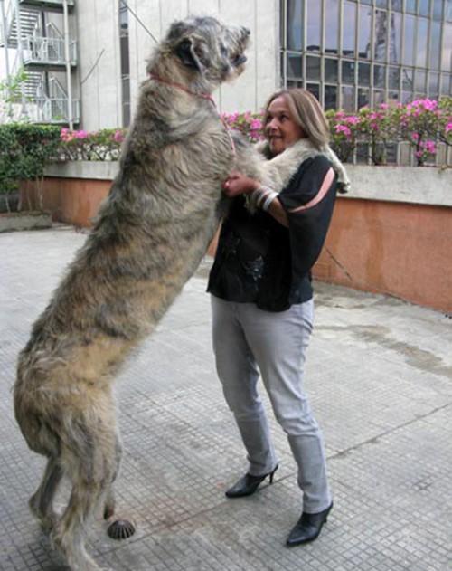 Dog.jpg (153 KB)