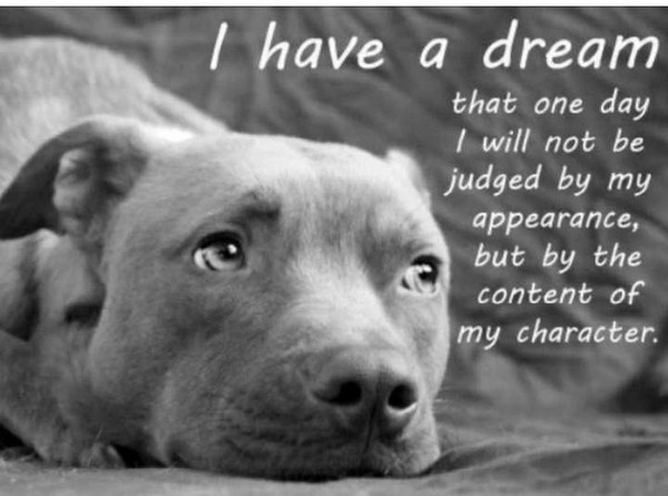 Doggy-Dream.jpg (54 KB)