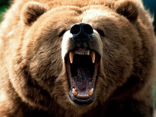 grizzly.jpg (141 KB)