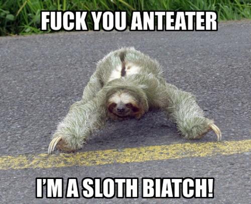 sloth4.jpg (167 KB)