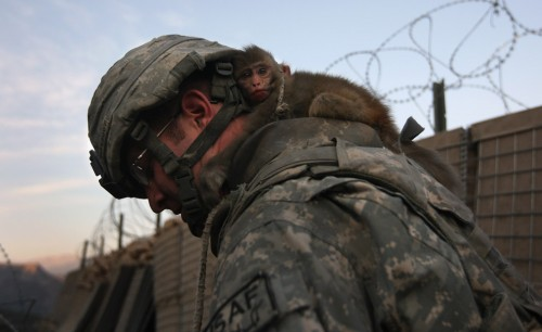 soldier monkey 500x306 Monkey on his back Military Cute As Hell Animals