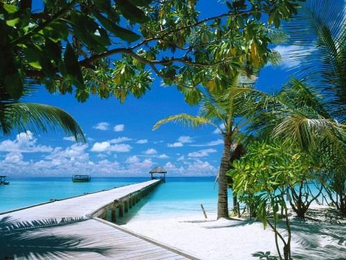maldives-ariatoll.jpg (598 KB)