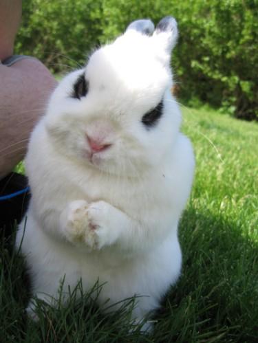 bunnyvillain.jpg (317 KB)