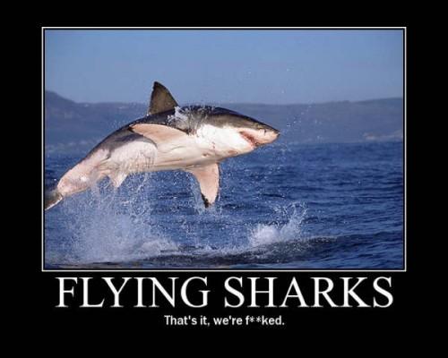 shark.jpg (124 KB)