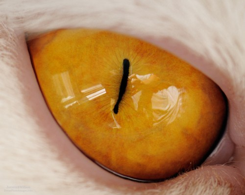 cat eye.jpg (368 KB)