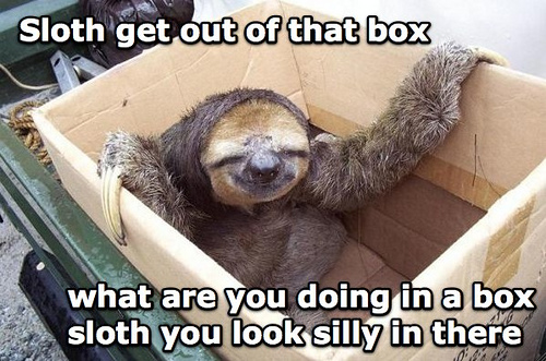 sloth.jpg (115 KB)