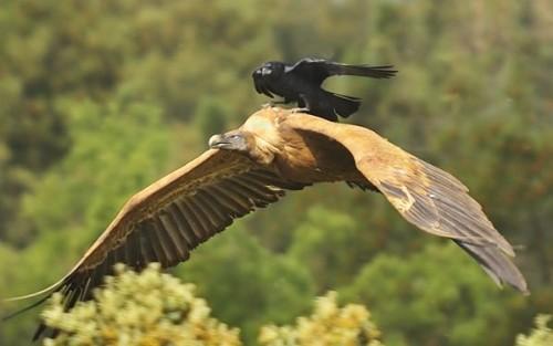 birds02.jpg (41 KB)