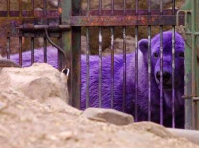 PurplePolar.jpg (25 KB)