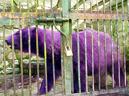 PurplePolarBear.jpg (49 KB)