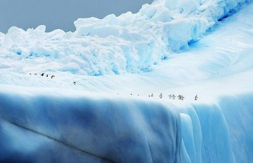 earth-penguins_1439391i.jpg (27 KB)