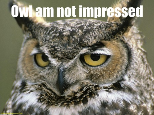 owl notimpressed 500x375 lolowlz Humor forum fodder Cute As Hell Animals