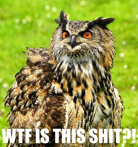 owl wtfisthisshit 469x500 lolowlz Humor forum fodder Cute As Hell Animals